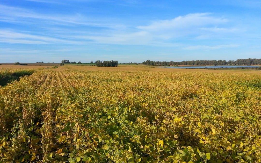 Uruguay Agricultural Land